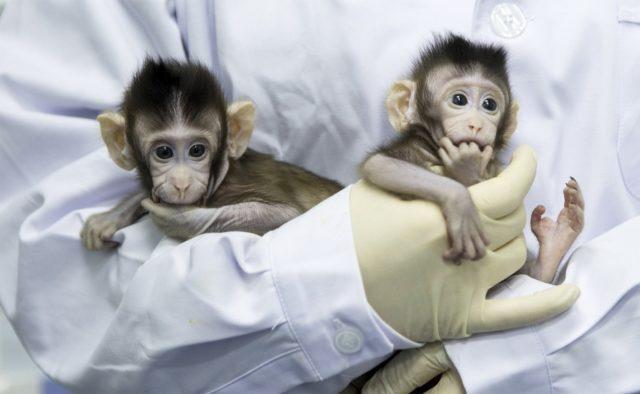 Сармагчны колон
