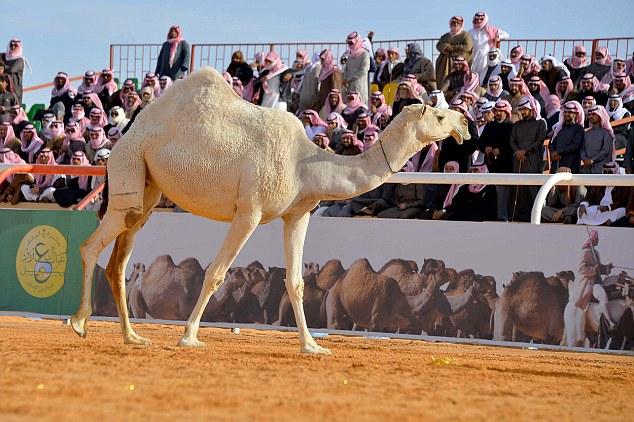 Miss Camel